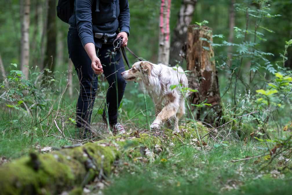 Slalomübung im Wald zum Muskelaufbau