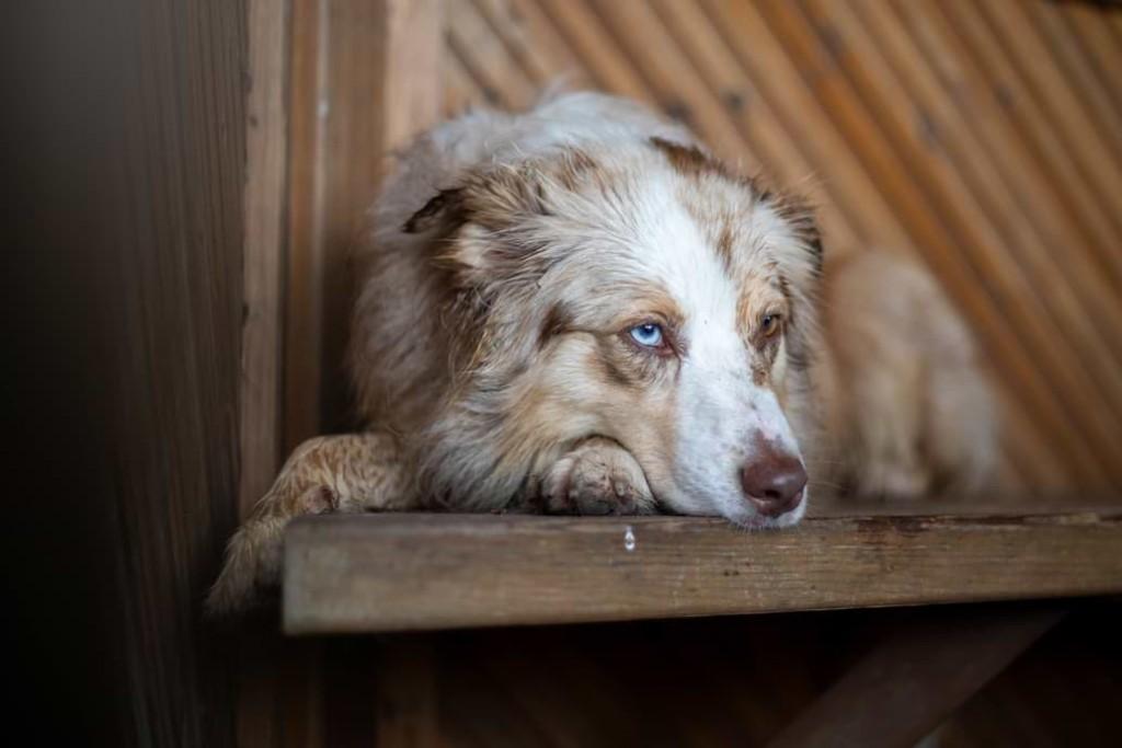 Hundefotografie mit einem 50mm Objektiv