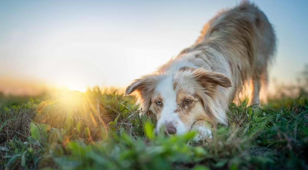 Hundefotografie - mein Equipment