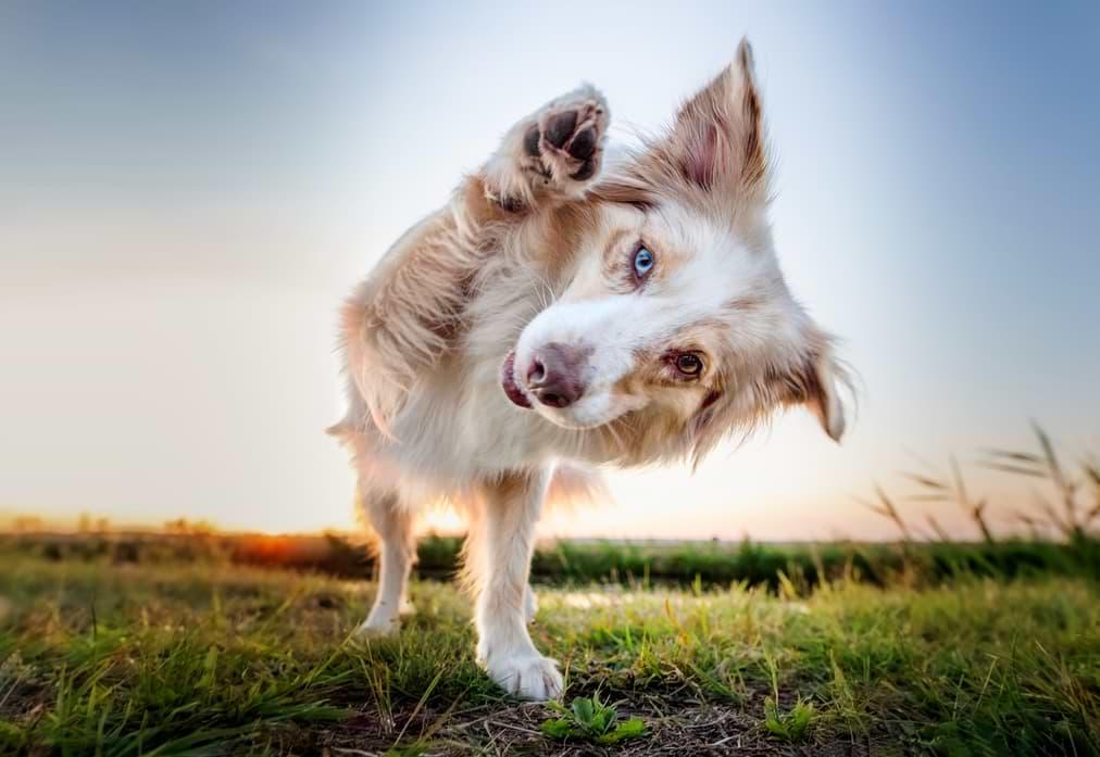 Hundefotografie mit Weitwinkelobjektiv