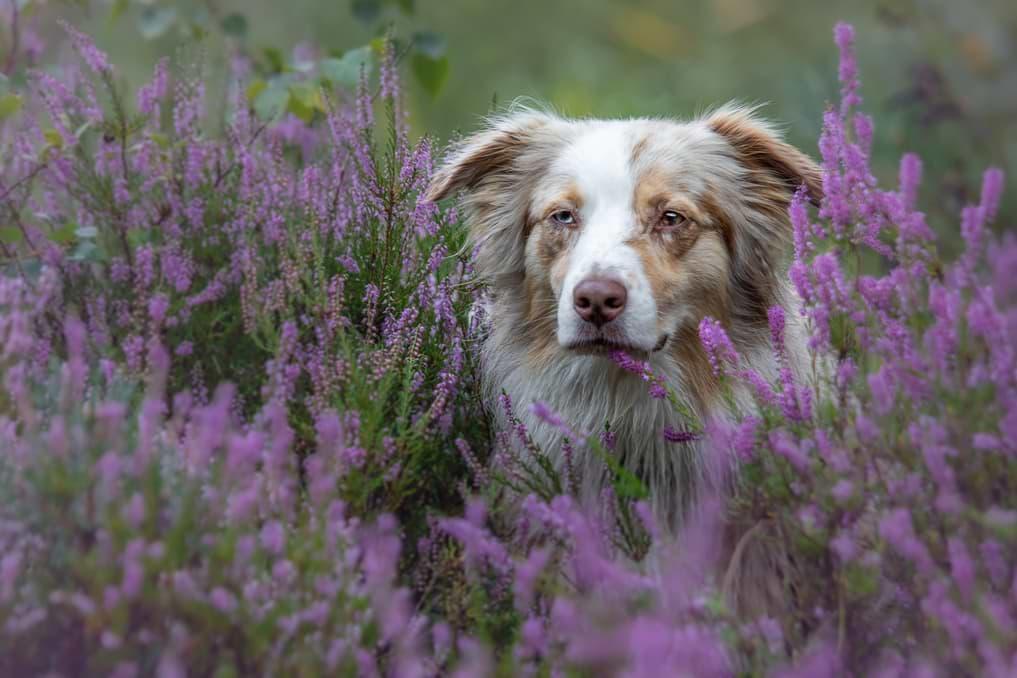 Hundefotografie mit einem Teleobjektiv