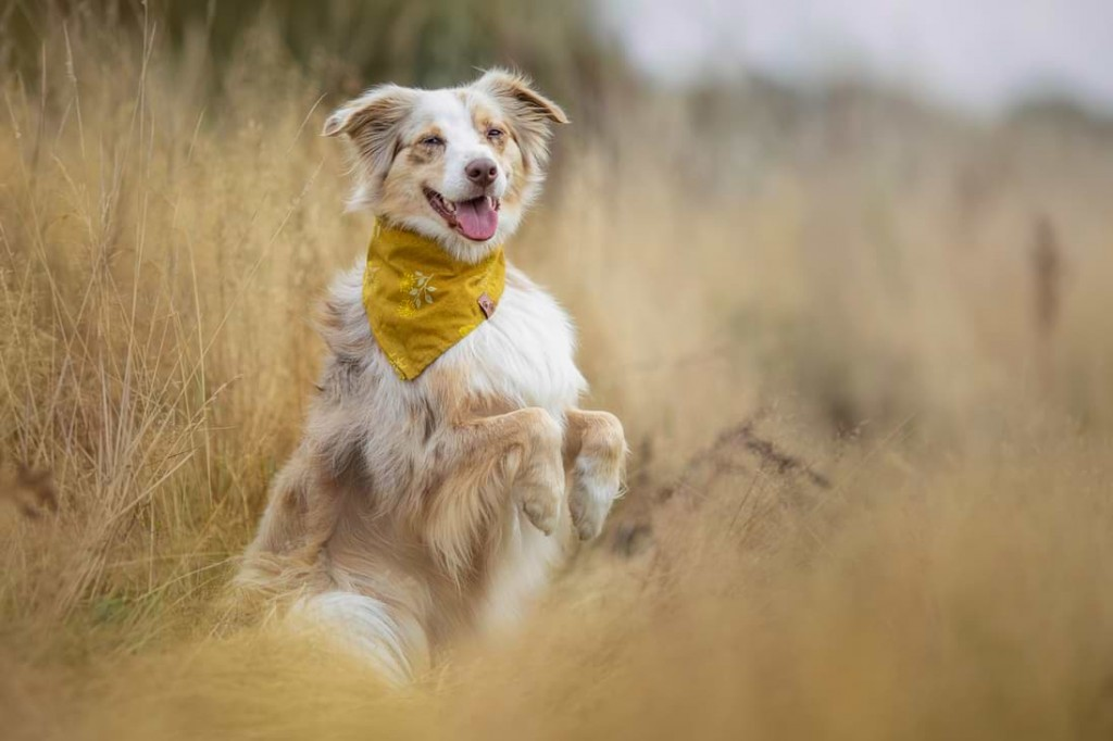 Hundefotografie mit dem Canon 135mm 2.0