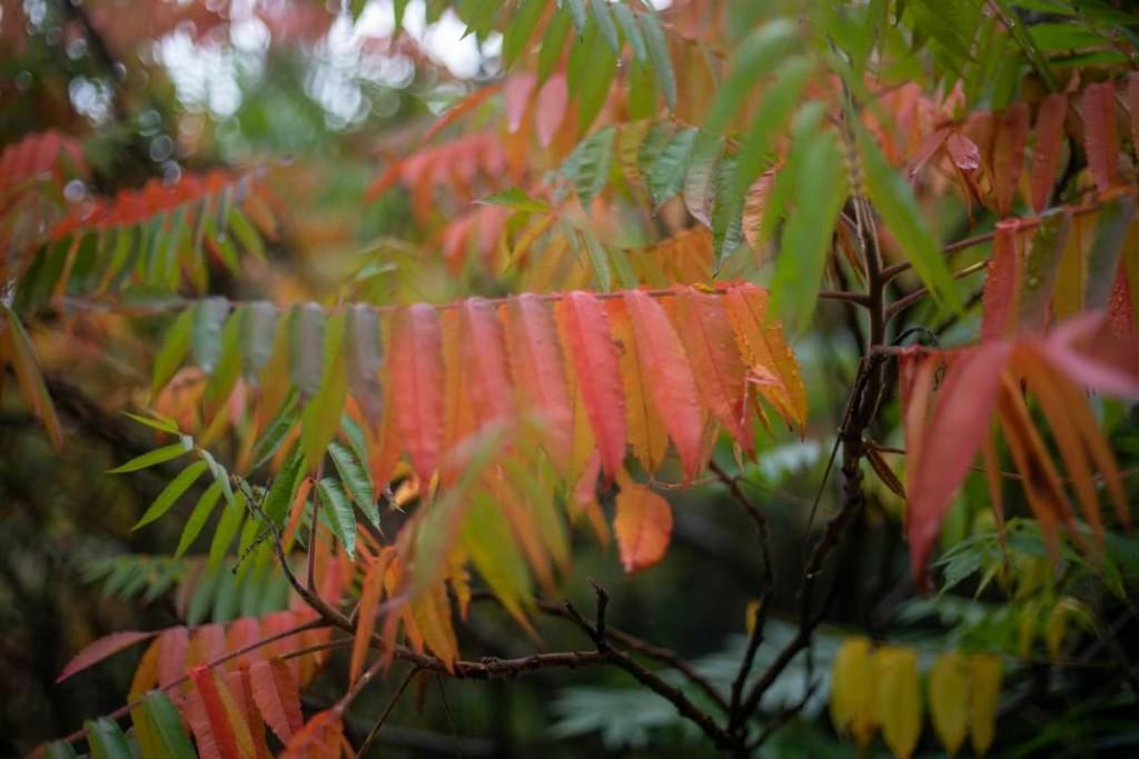 Herbstlaubfärbung