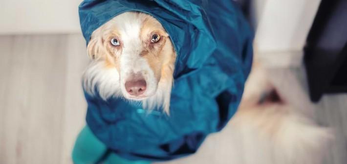 Hunde bei schlechtem Wetter auslasten