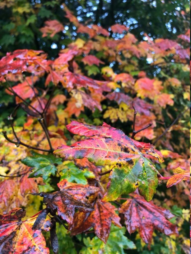Herbstfärbung im Weltwald