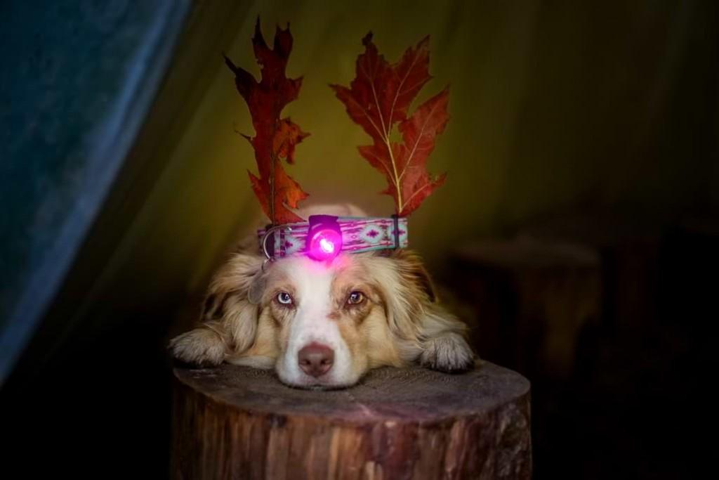 Weihnachtsgeschenke für den Hund