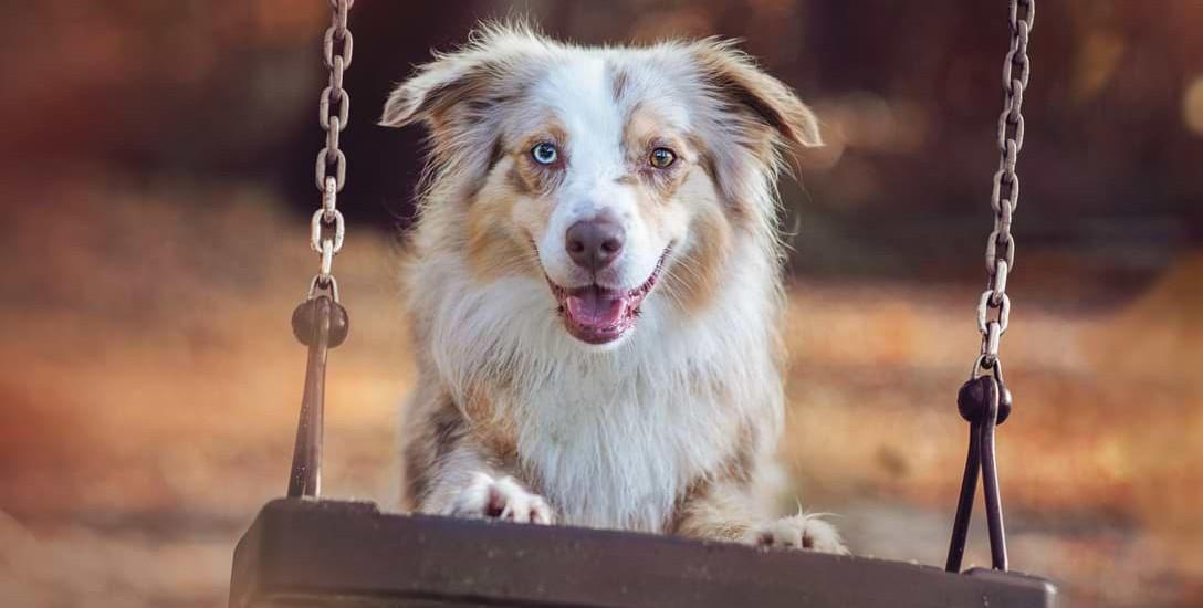 Bildgestaltung in der Hundefotografie