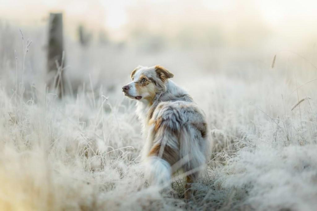 Mira im Winter