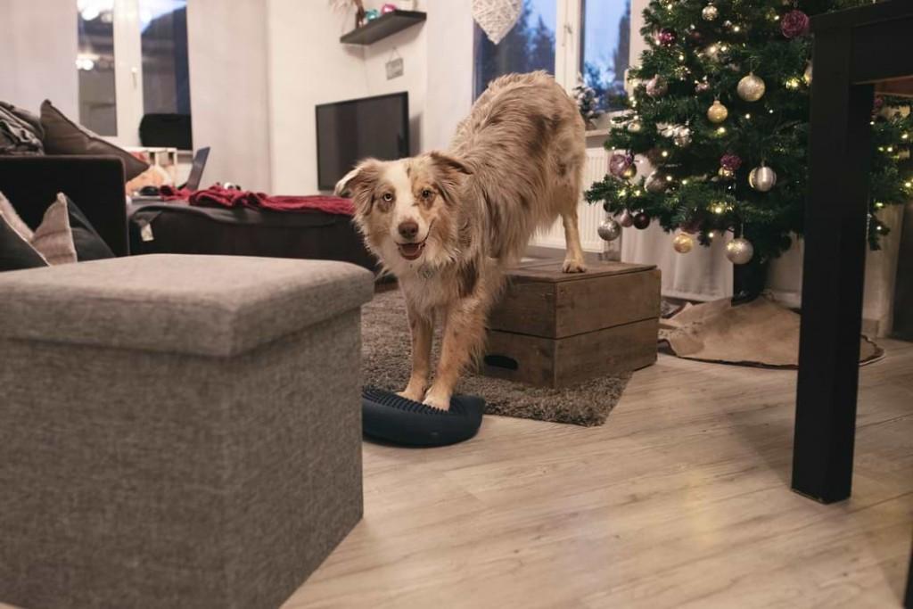 Koordinationstraining für Hunde