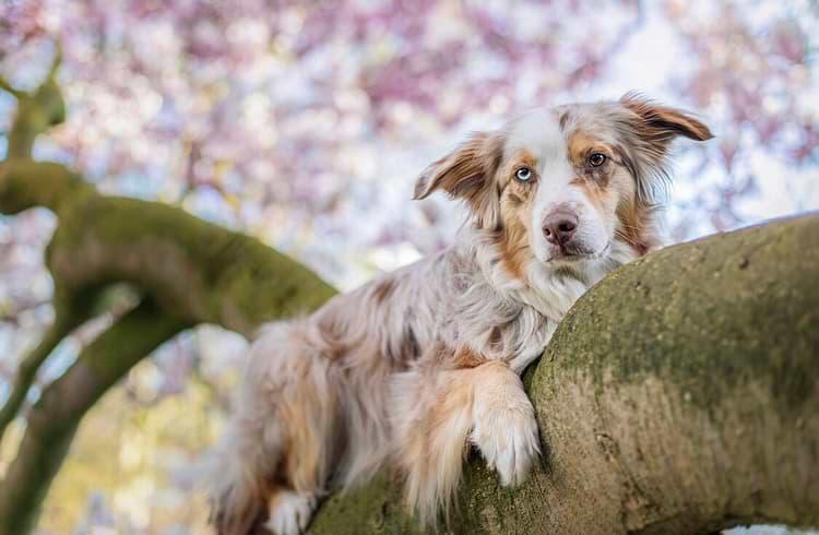 Mira im Magnolienbaum