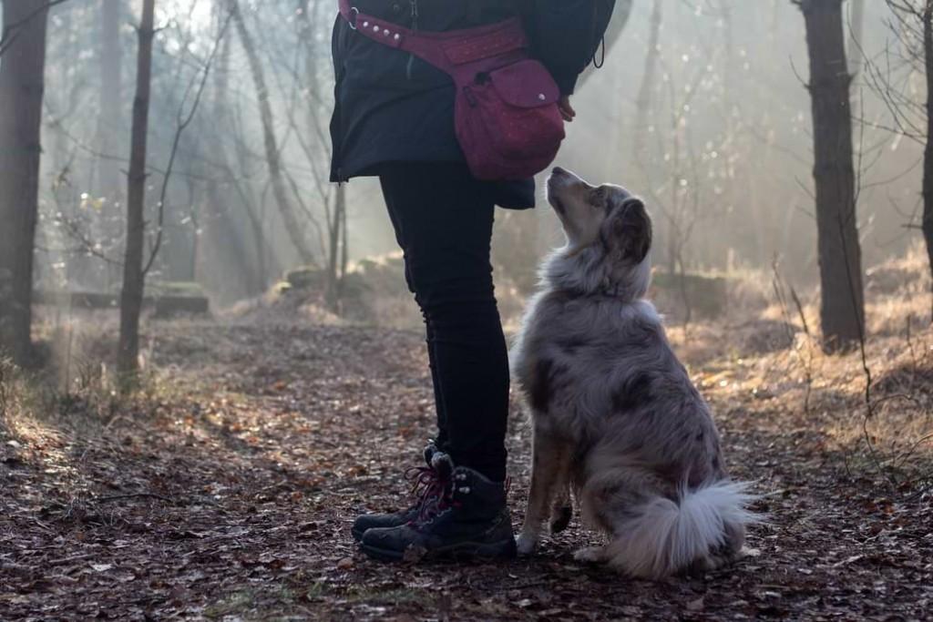 Hund Sicherheit vermitteln
