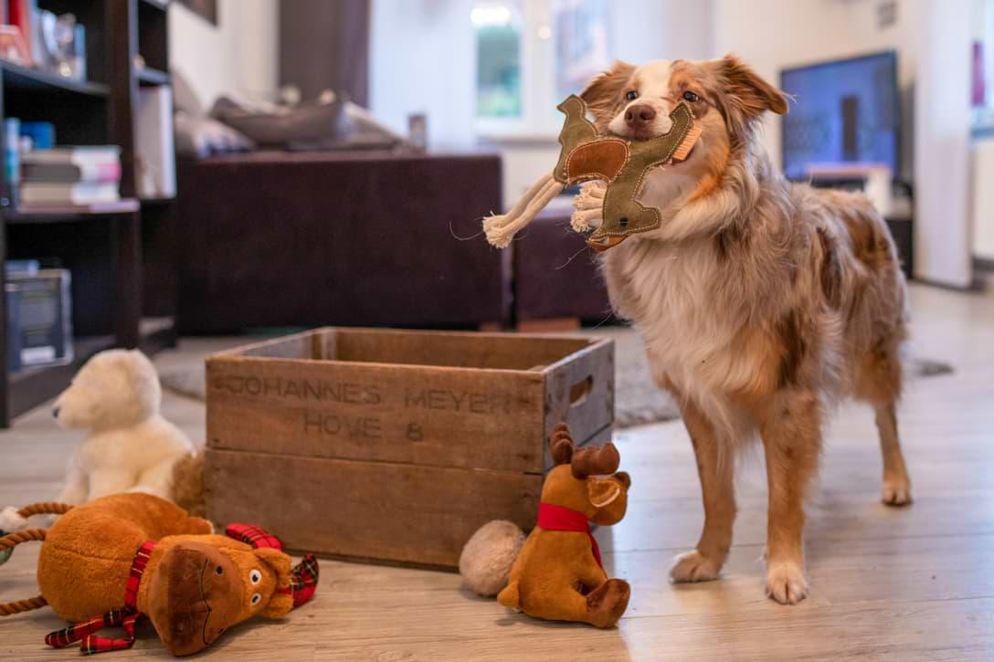 Mira räumt Spielzeug in Kiste