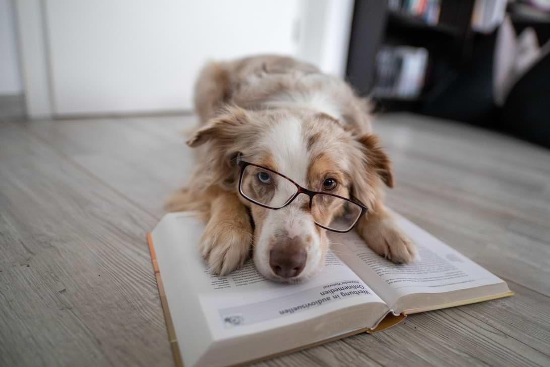 Mira liest ein Buch