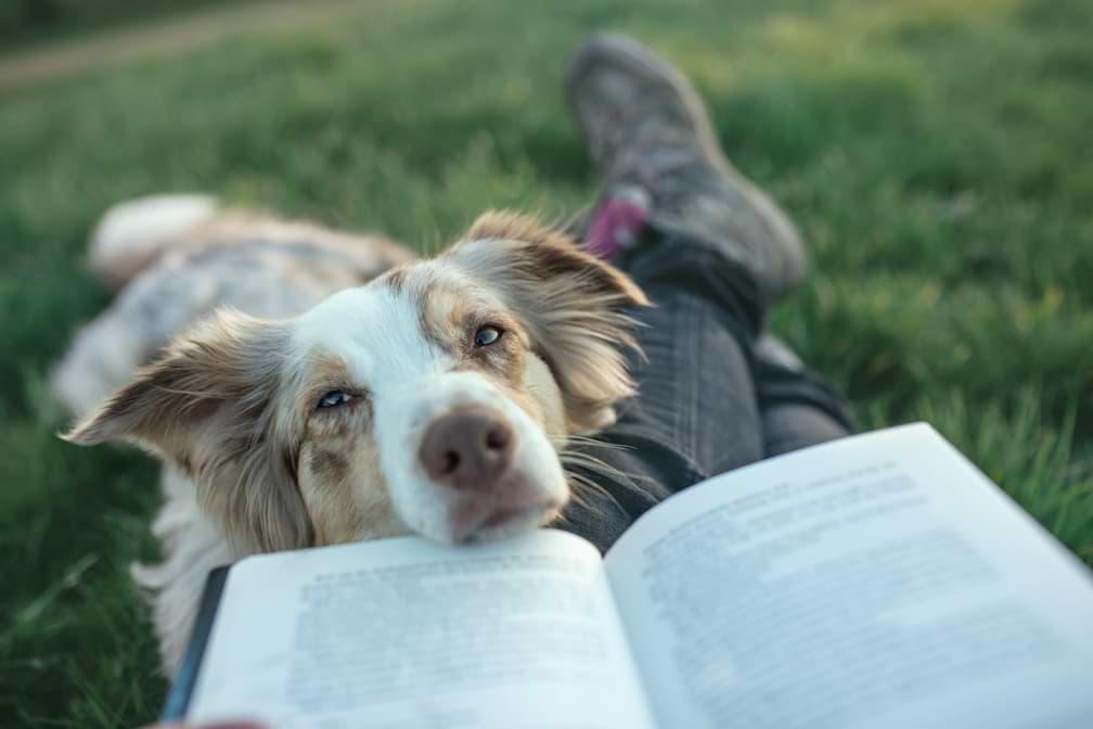 Reaktiver Hund - Pausen sind wichtig