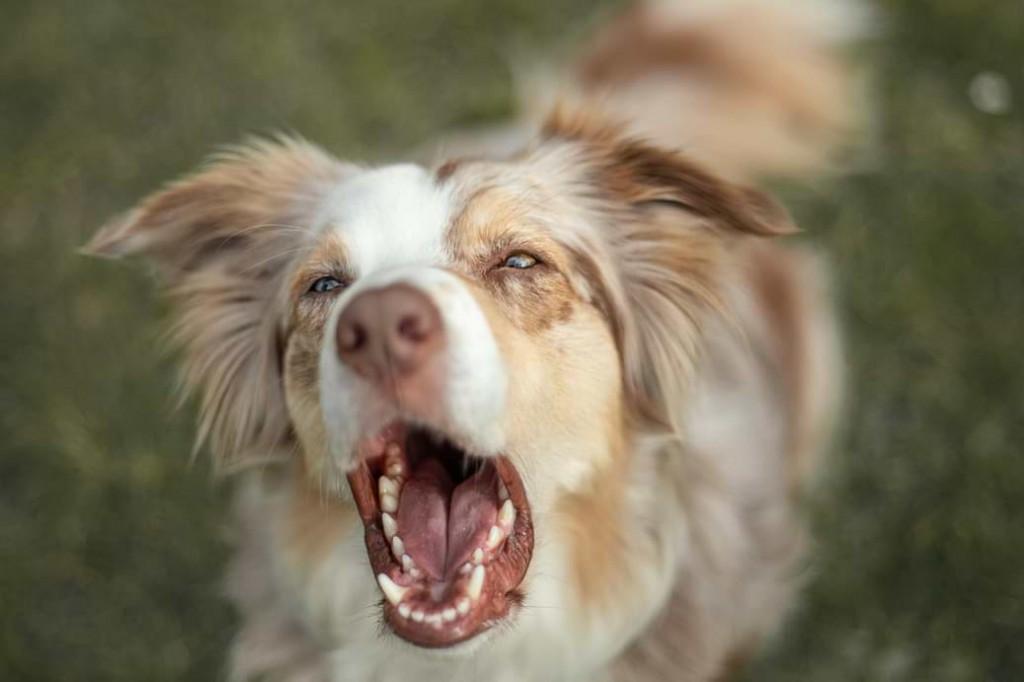Reaktiver Hund
