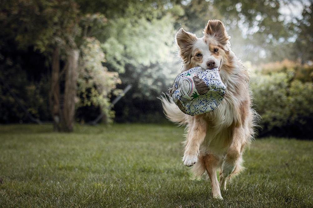 Mira mit Ball