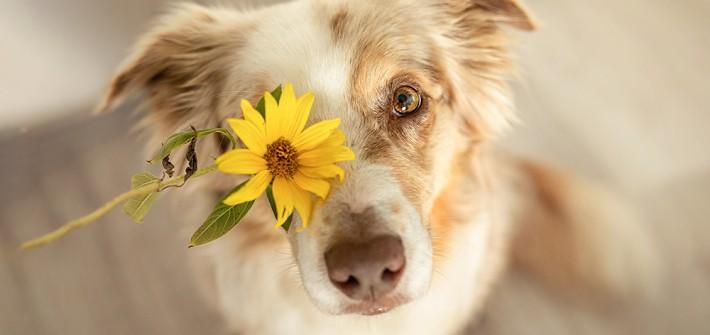 Stress beim Hund