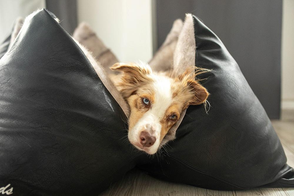 Stress beim Hund - Sorge für Ruhe