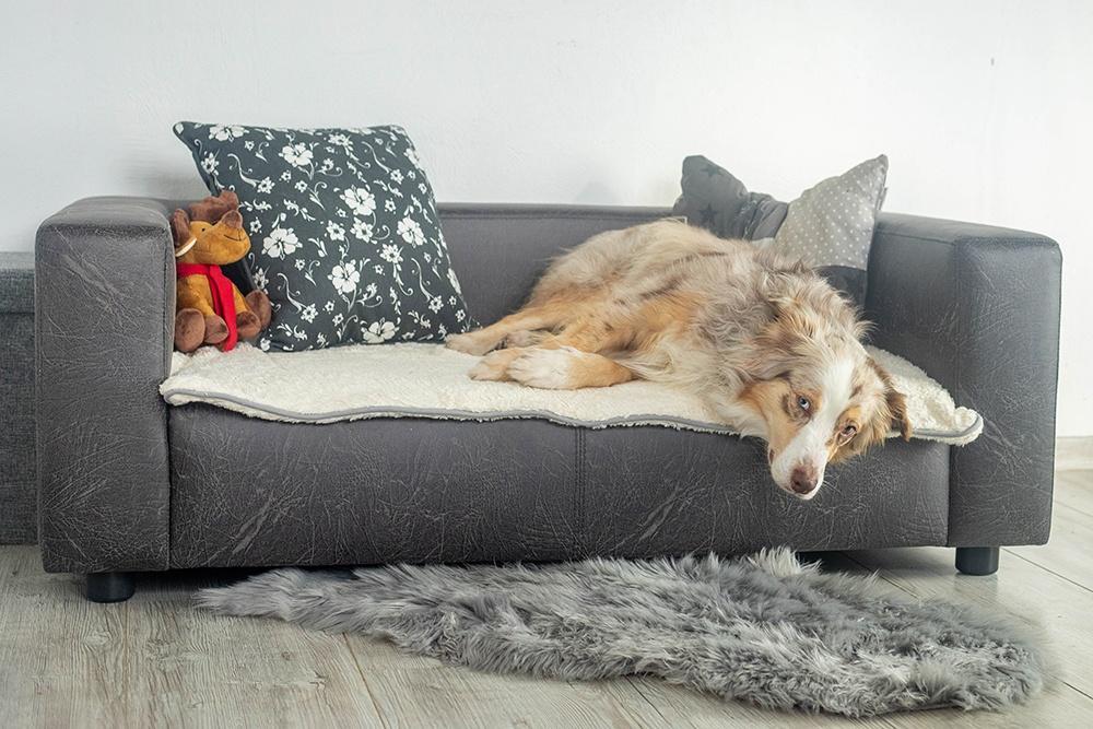 Mira liegt auf Hundebett