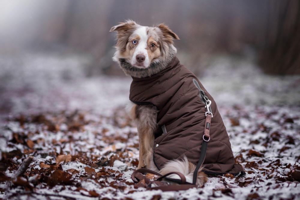 Sehnenleiden beim Hund