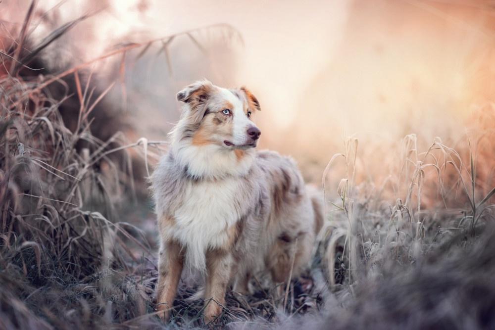 Ausrüstung Hundefotografie