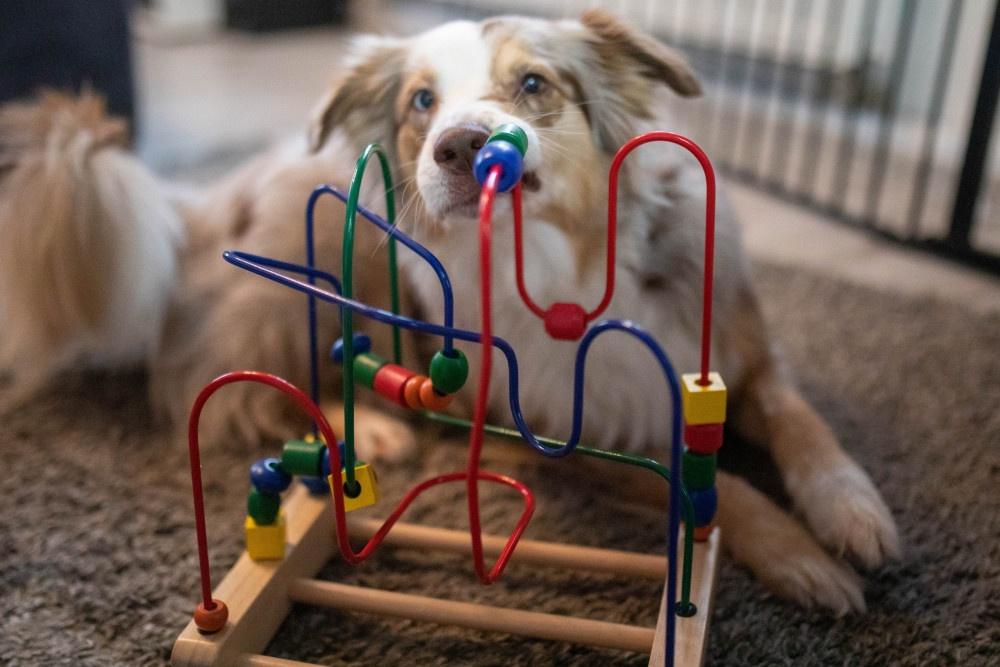 Kinderspielzeuge für Hunde