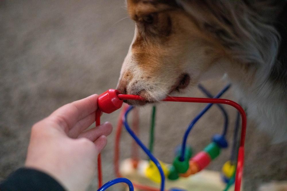 Kinderspielzeuge für Hunde Motorikschleife