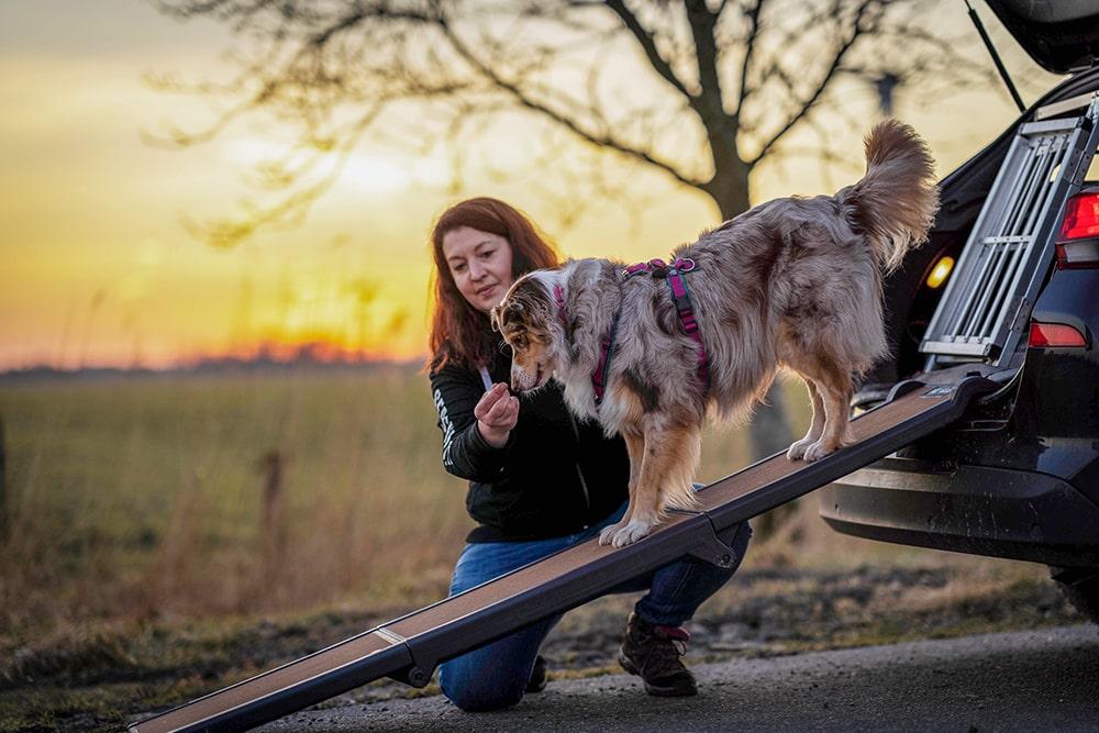 Aussteigen über eine Einstiegshilfe für Hunde