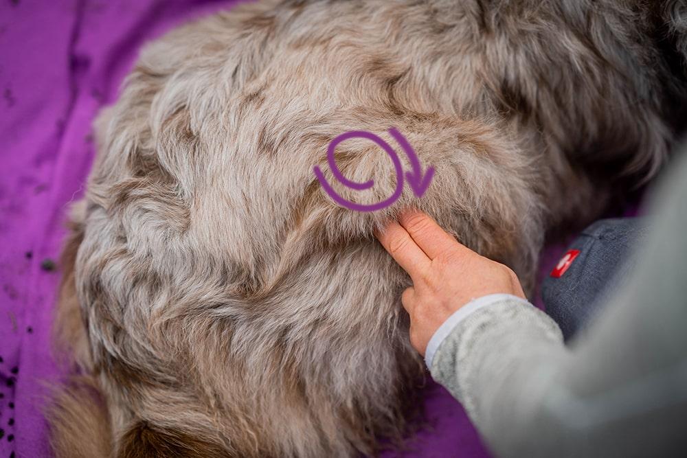 Hunde massieren mit nach der TTouch Methode