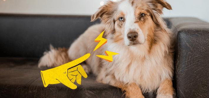 Hund elektrisch geladen