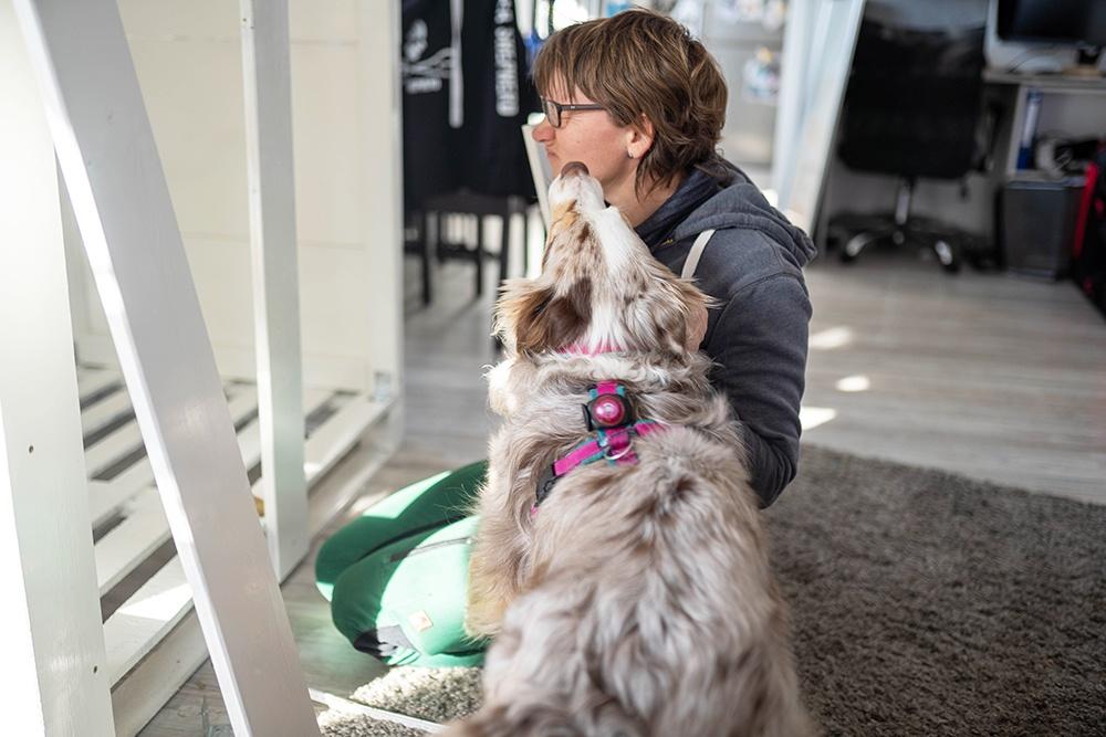 Spaß beim Hundebox selber bauen