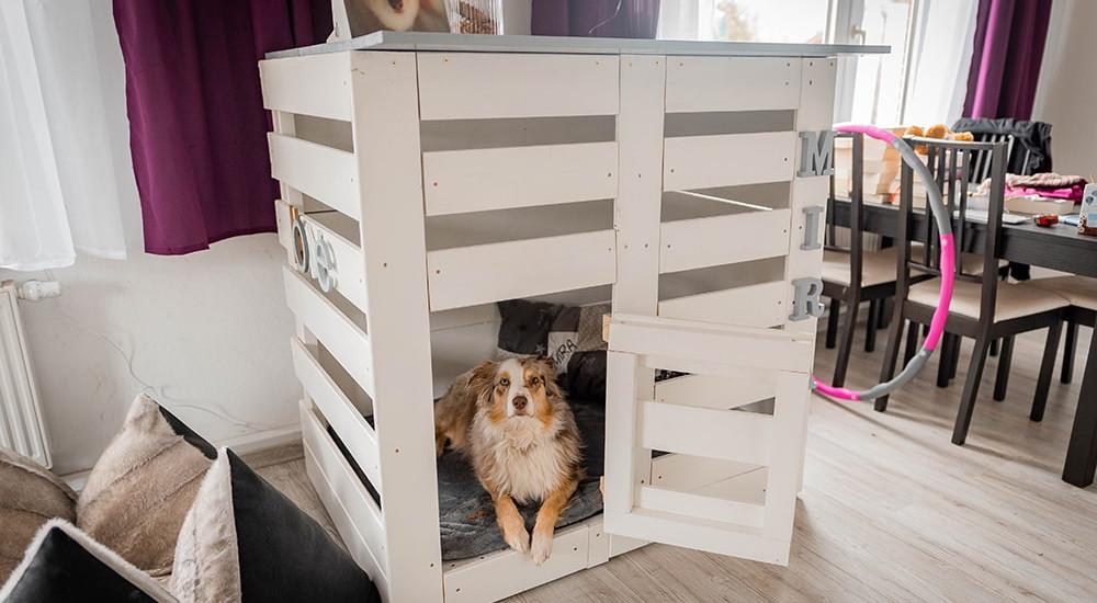 Hundebox selber bauen