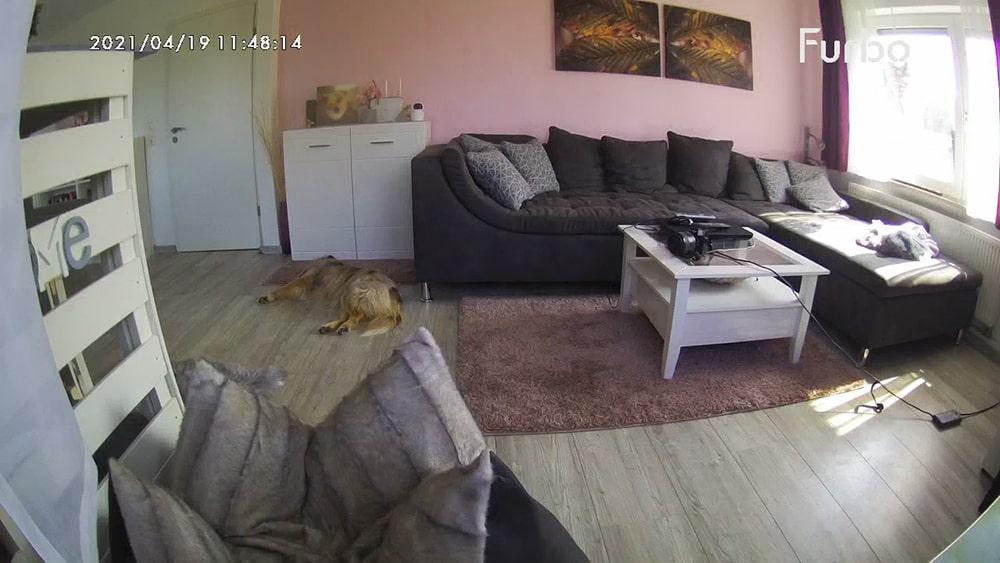 Hund auf Düfte konditionieren
