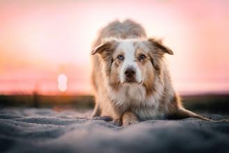 Selbstvertrauen vom Hund stärken