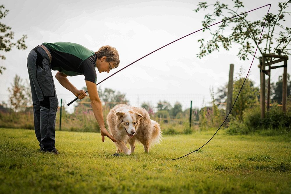 Impulskontrolle und Frustrationstoleranz mit Hunden trainieren.