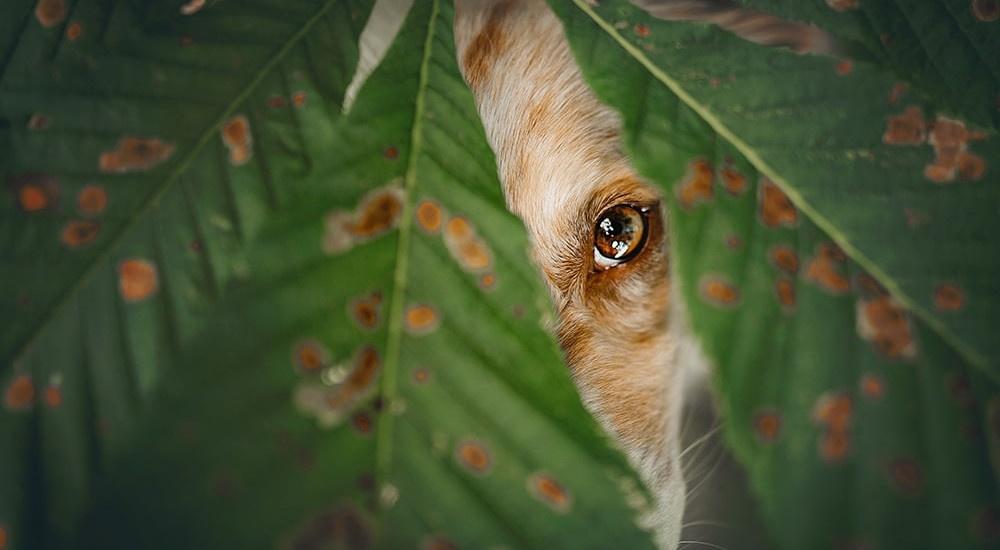 Territorialverhalten beim Hund