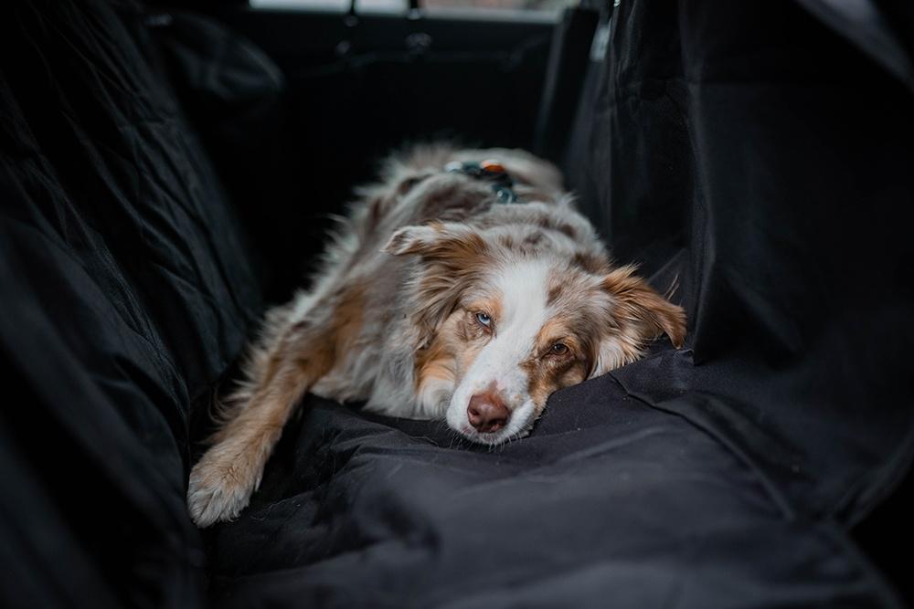 Hundetransport mit einer Autoschondecke