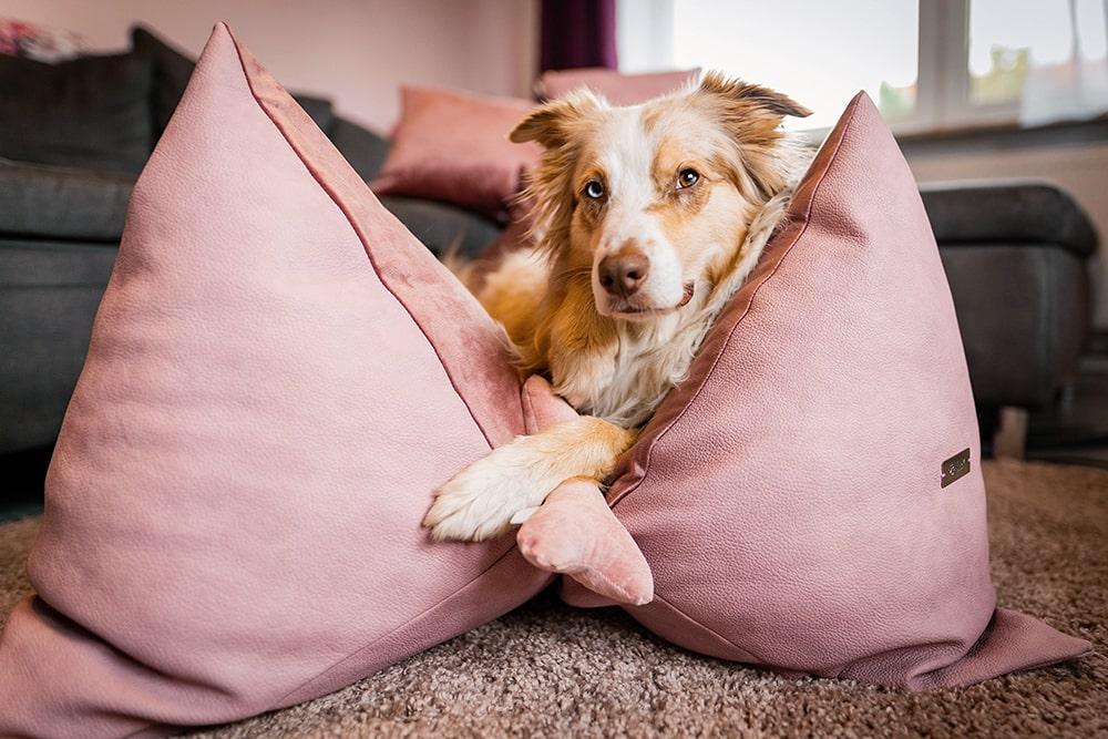 Territoriales Verhalten: Achte auf die Position des Schlafplatzes!